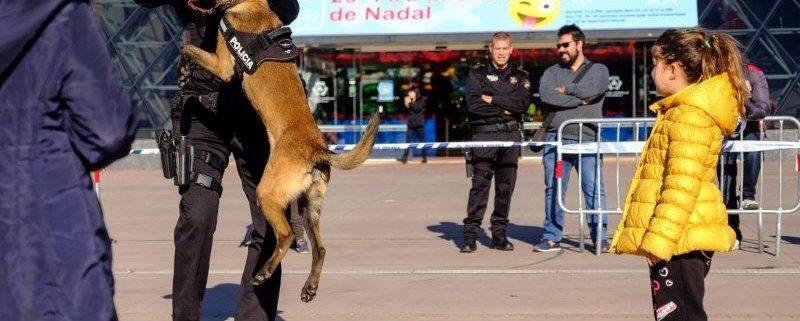 exhibició canina